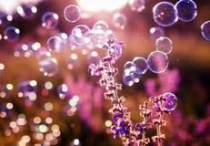 Сияющие радужные пузыри мыла летают над зеленым летом ярким mea Стоковое Изображение RF