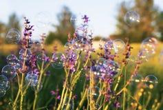 Сияющие радужные пузыри мыла летая над цветистым meado лета Стоковые Изображения RF