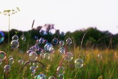 Сияющие радужные пузыри мыла летая над цветистым meado лета Стоковое Изображение