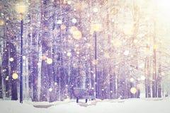 Сияющие снежинки на предпосылке парка зимы Тема рождества и Нового Года Снежности зимы в красочном заходе солнца Стоковые Фотографии RF