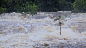 Сила тропического реки в Африке, Экваториальной Гвинее сток-видео