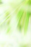 Сила цветка Стоковое Изображение