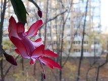 Сила цветка Стоковое Изображение RF