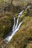 Сила Ghyll запаса, Ambleside, Cumbria, Великобритания Стоковые Изображения