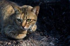 Сидения на корточках кота Стоковые Изображения