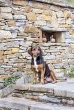 Сидеть бездомной собаки внешний Стоковая Фотография RF