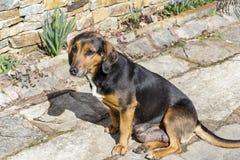 Сидеть бездомной собаки внешний Стоковые Фото