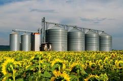 силосохранилища Поле с солнцецветами Стоковые Фото