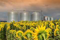 Силосохранилища для хранить зерно Стоковое Изображение
