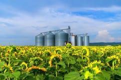 силосохранилище Поле с солнцецветами Стоковые Изображения RF