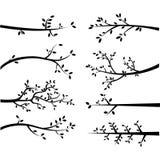 Силуэты ветви Стоковые Изображения RF