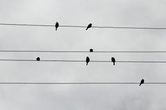 Силуэты воробьев на проводах выглядеть как музыкальные примечания Стоковые Изображения RF