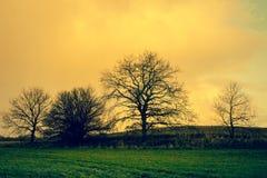 Силуэты дерева в ландшафте восхода солнца Стоковые Изображения RF