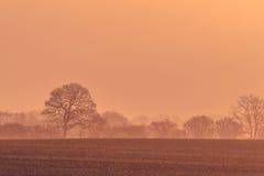 Силуэты дерева в восходе солнца утра Стоковые Фотографии RF