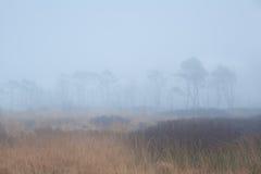 Силуэты дерева в густом тумане Стоковое Изображение