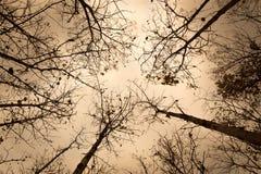 Силуэты дерева в сухом лесе Стоковые Изображения RF