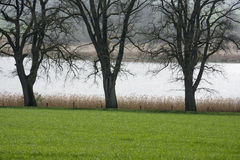 Силуэты дерева на воде Стоковое фото RF