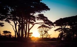 Силуэты дерева на заходе солнца на ландшафте seashore Стоковое Изображение RF