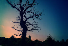 Силуэты дерева на заходе солнца Стоковые Изображения
