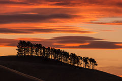Силуэты дерева на заходе солнца Стоковая Фотография RF