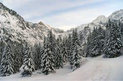 Силуэты деревьев и пиков в зиме Стоковые Фотографии RF