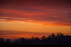 Силуэты деревьев на горизонте против красного неба Стоковое Изображение RF