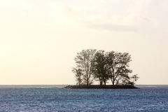 Силуэты деревьев на крошечном острове Стоковые Изображения RF