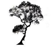 Силуэты деревьев бесплатная иллюстрация