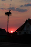 Силуэты захода солнца белых аистов спаривают позаботиться о будущее отродье в большом гнезде Стоковые Изображения
