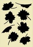 Силуэты листьев клена Стоковые Изображения