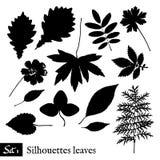 силуэты листьев установленные Изолировано на белизне Стоковая Фотография