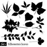 силуэты листьев установленные Изолировано на белизне Стоковые Фотографии RF