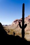 Силуэты кактуса и hiker Saguaro в Ajo выстраивают в ряд Стоковые Фото