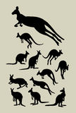 Силуэты кенгуру Стоковые Фотографии RF