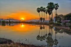 Силуэты кокоса Стоковое фото RF