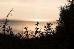 Силуэты некоторых заводов в дюне на заходе солнца Стоковые Фотографии RF