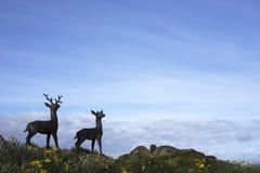 Силуэты оленей и затмевая небо Стоковая Фотография RF