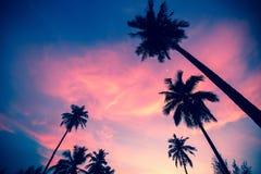 Силуэты пальм на заходе солнца Стоковое фото RF