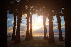 Силуэты пальм против моря, захода солнца Стоковые Фотографии RF