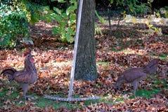 Силуэты, петух и курица, полученные при железный лист помещенный в угле замка Strassoldo Friuli (Италия) Стоковое Изображение RF
