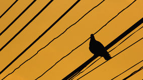 Силуэты птиц a Стоковые Фотографии RF