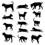 Силуэты собак Стоковое Изображение RF