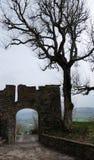 Силуэты старого строба и чуть-чуть дерева Стоковое фото RF