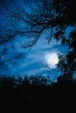 Силуэты сухого дерева против неба и красивой супер луны Ou Стоковое Изображение RF