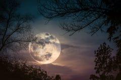 Силуэты сухого дерева против неба и красивой супер луны Ou Стоковое Фото