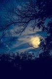 Силуэты сухого дерева против неба и красивой супер луны Ou Стоковые Фотографии RF