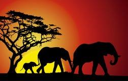Заход солнца сафари с слонами иллюстрация штока