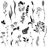 Силуэты травы Стоковое Фото