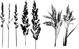 Силуэты луга, трава Стоковое Изображение