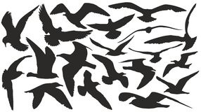 силуэты установленные чайками Стоковое Фото